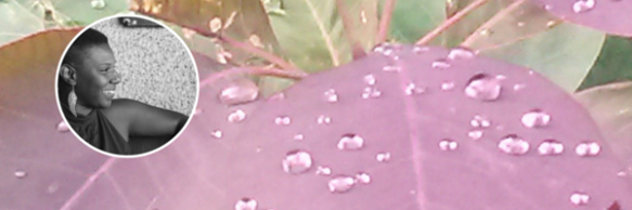 FMS Web Banner - No Text_Pics Only