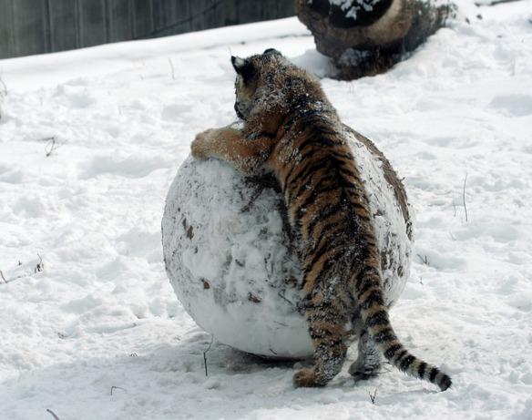 tiger-cub-1803210_640